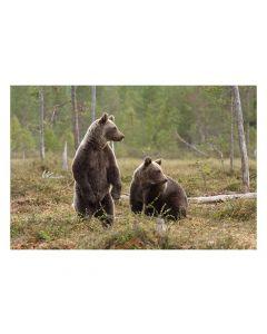 Minipussel 150 bitar Björn